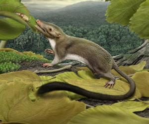 Representación artística de un ancestro de los mamíferos placentarios. / Carl Buell