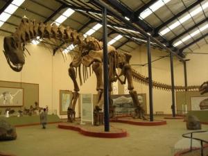 Réplica de un esqueleto reconstruido de Argentinosaurus huinculensis, expuesto como parte de una exposición especial en el Museo Senckenberg de Historia Natural en Fráncfort, Alemania. Los restos fósiles de este titanosaurio que vivió en el período Cretáceo Temprano fueron descubiertos en la provincia de Neuquén, Argentina. El Argentinosaurus huinculensis es actualmente el saurópodo más grande conocido, con una longitud total de 38 metros y un peso corporal total estimado de 75 toneladas. (Foto: © Eva Maria Griebeler)
