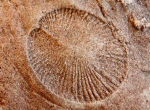 El enigma de por qué, una vez surgida la vida pluricelular, el tamaño de muchas de las nuevas especies comenzó a incrementarse de manera sistemática, parece que se ha resuelto. La ilustración es una recreación artística de algunas de aquellas primeras formas de vida acuáticas.