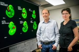 Axel Visel y Catia Attanasio han encontrado miles de interruptores en el genoma humano que controlan el desarrollo craneofacial. (Foto Por Roy Kaltschmidt)