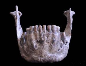 Un equipo de investigadores del Centro Nacional de Investigación sobre la Evolución Humana acaba de publicar en la revista PLOS ONE un estudio sobre la morfología comparada de los restos fósiles humanos hallados en el yacimiento más importante de la República de Georgia.