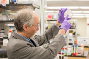 Un equipo internacional de científicos ha logrado crear un cromosoma eucariota en el laboratorio. En concreto, han sintetizado el de la levadura Saccharomyces cerevisiae, con el que se fabrica el pan, la cerveza y el vino. Este logro supone un gran paso en el campo de la biología sintética que permitirá el diseño de microorganismos para producir nuevos medicamentos, materias primas para la alimentación y biocombustibles.