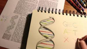 Científicos del Instituto de Investigación Scripps (EE UU) han diseñado una bacteria cuyo material genético incluye un par adicional de 'letras' o bases de ADN que no se encuentran en la naturaleza. El estudio se publica en la revista Nature.