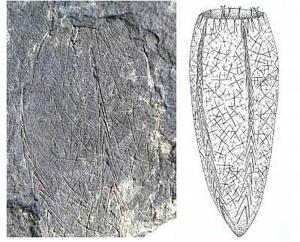 Una parte de uno de los nuevos especímenes fósiles del género Metaxyspongia con simetría tetrarradial, y la reconstrucción, a la derecha, de todo el animal. (Imágenes: © Science China Press)